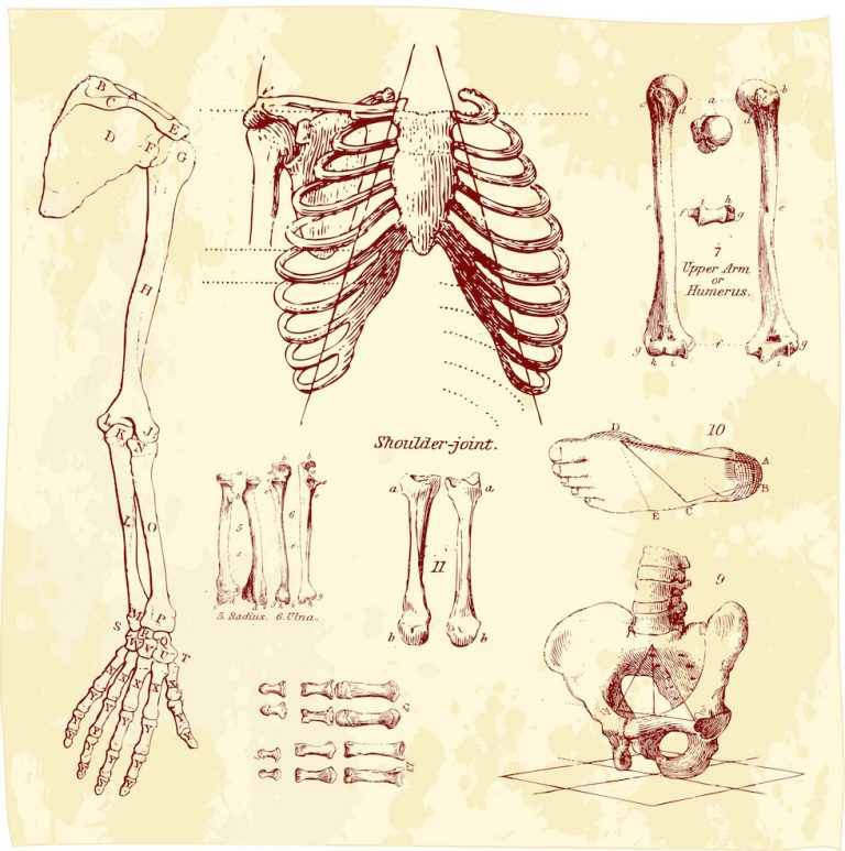The History of Osteopathy